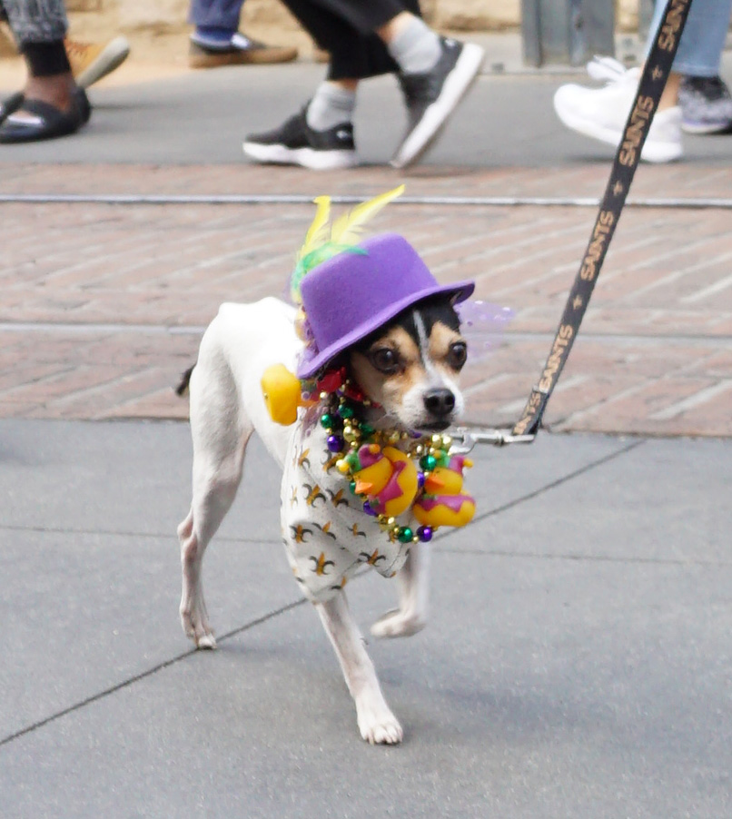 Mutti-Gras-Parade-Flower-Los Angeles, CA (2/22/20)